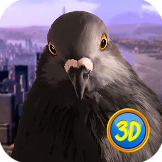 Pigeon Survival: Town Bird
