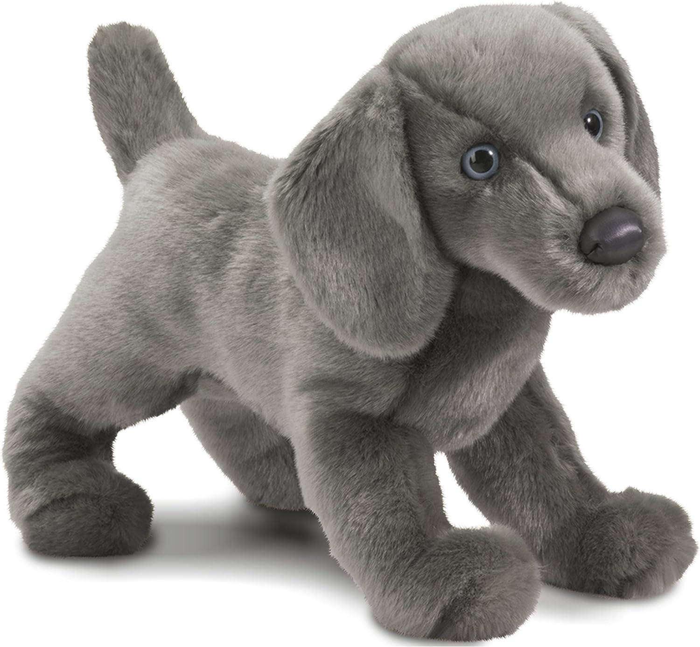 Douglas CASSIE the WEIMARANER DOG