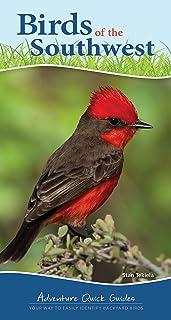 Birds of the Southwest: Your Way to Easily Identify Backyard Birds