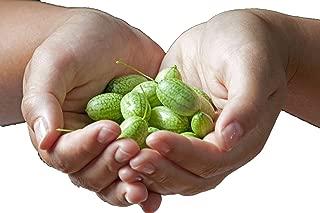 RDR Seeds 15 Cucamelon Seeds - Mouse Melon, Mexican Sour Gherkin, Mini Watermelon, Melothria Scabra