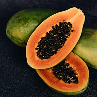 Kejora Fresh Tropical Hawaiian Papaya 3 pcs - Exotic Fruits