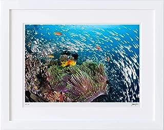 【写真工房アートフォト 額装写真】 モルディビアン・アネモネフィッシュとスカシテンジクダイの群れ/アリ環礁/モルディブ(ホワイト 大判サイズ 557mm×442mm)
