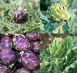 David's Garden Seeds Collection Set Artichoke Open Pollinated SY8367 (Multi) 4 Varieties 125 Seeds (Non-GMO, Open Pollinated, Heirloom)