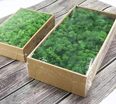 Amazon Com Artificial Green Plant Immortal Fake Flower Moss Grass Home Living Room Decorative Wall Diy Flower Mini Accessories I Home Kitchen