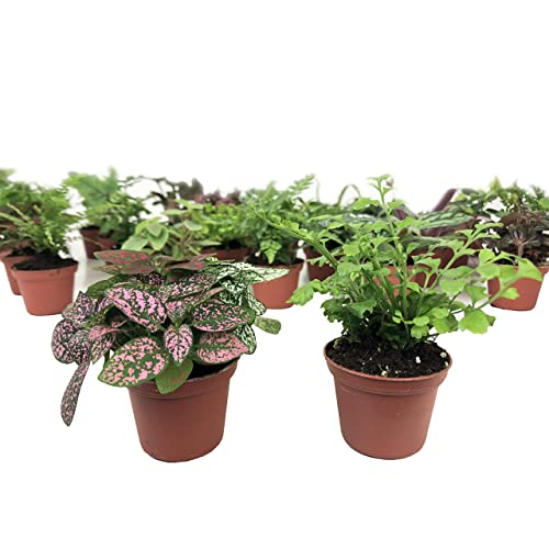 Small Terrarium Plants Amazon Com