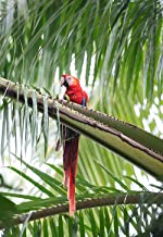 Best scarlet macaw national geographic Reviews