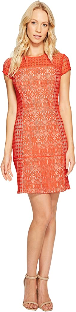 Jessica Simpson - Short Sleeve Lace Dress