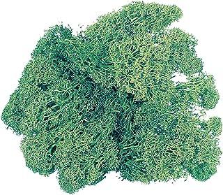大地農園 プリザーブドフラワー アイスランドモス小袋 (約40g入り) モスグリーン DO061071-760