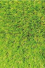 Ottomanson Solid Design Area Grass Rug, 3'11