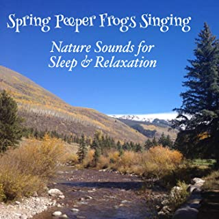 Spring Peeper Frogs Singing