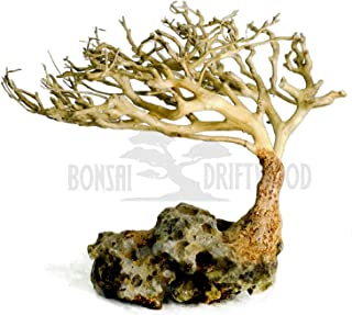 bonsai aquarium driftwood