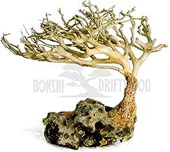 Bonsai Driftwood Aquarium Tree (5 Inch Height) Natural, Handcrafted Fish Tank Decoration..