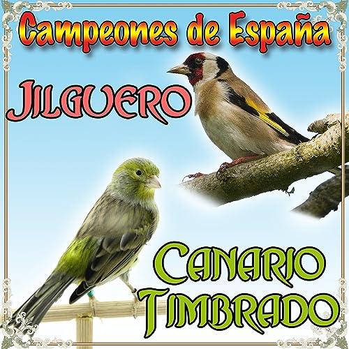 JILGUERO MP3 GRATUIT