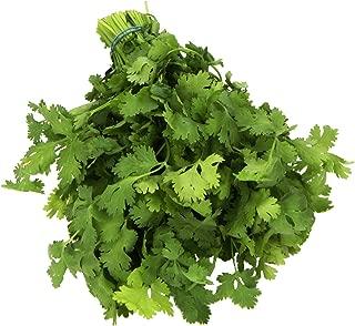 Herb Cilantro Conventional, 1 Bunch