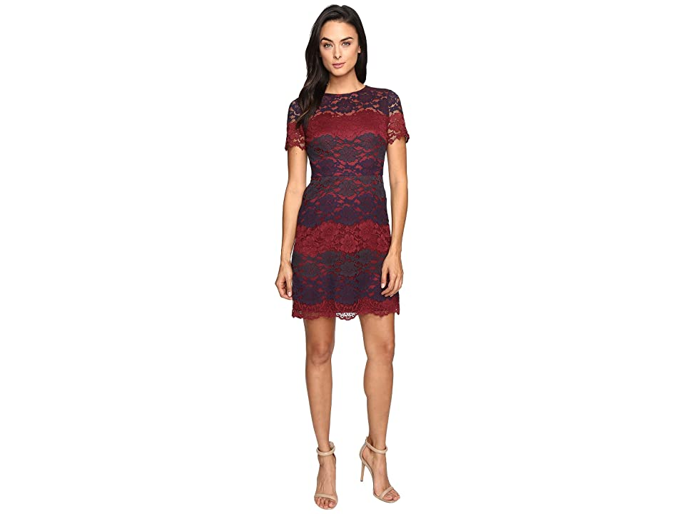 Maggy London Tri-Color Lace Fit and Flare (Wine/Navy) Women