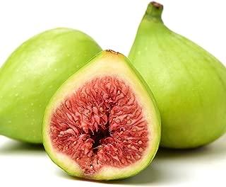 ischia green fig