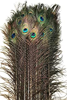 American Feathers Eyed Peacock Tail Feathers 30-35