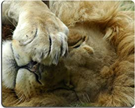 luxlady Gaming Mousepad un gran Lazy inactiva Resting Lion Head Retrato con Big melena de ser Bored y ver otros Leones en una imagen de Game Park en Sudáfrica ID