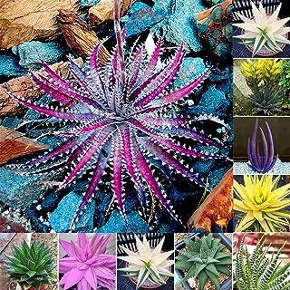 40 graines Mini Succulent Seed Tetragonia Pierre Bleue Graines de fleurs Livraison gratuite S