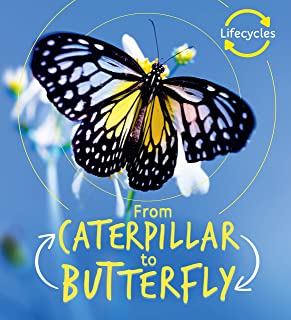 From Caterpillar to Butterfly (Life Cycles)