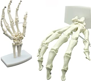 MAYMII PVC Human Hand Skeleton Medical Anatomical Model on Base Stand, Life Size, Articulated