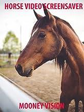 Horse Video Screensaver
