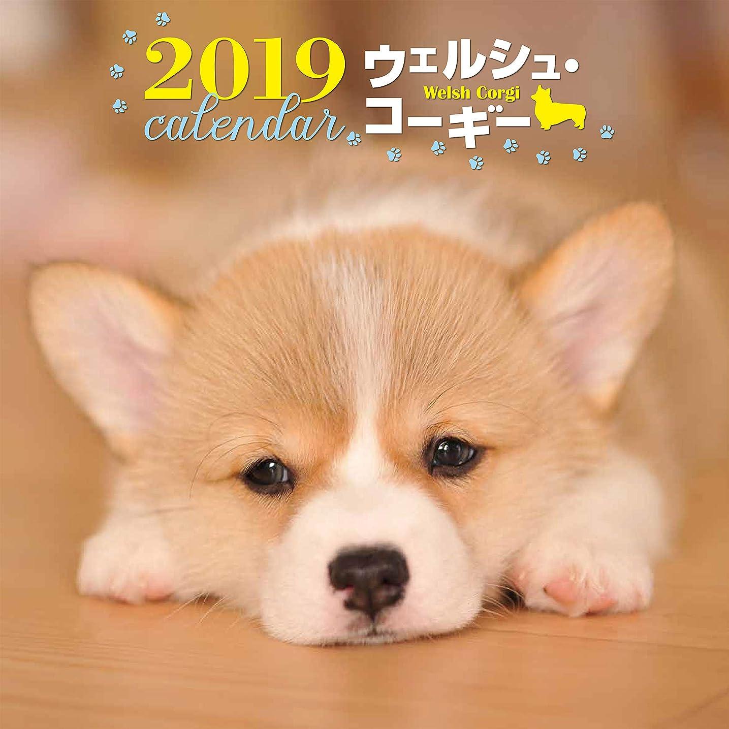 膨らみ頭痛咲く2019年大判カレンダー ウェルシュ?コーギー