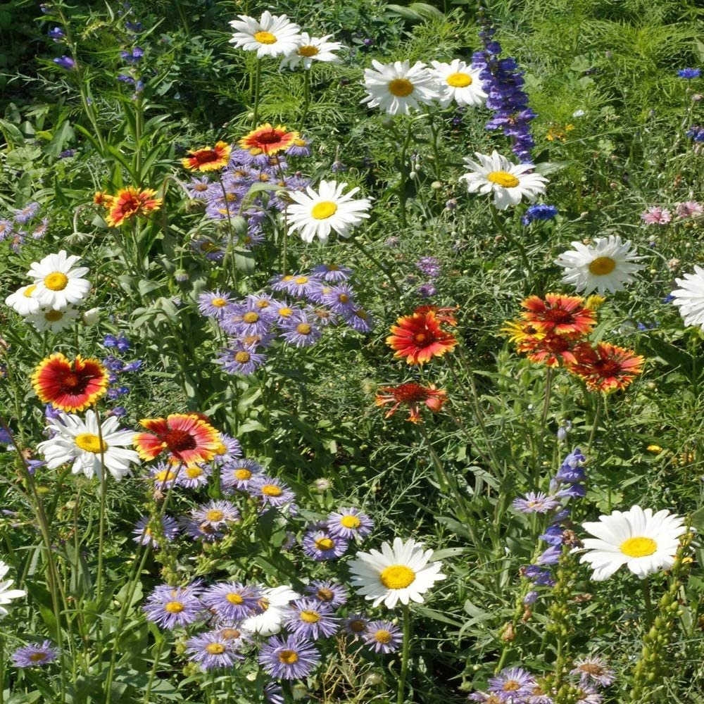 Outsidepride Special price Mountain Wildflower Seed - LB Omaha Mall Mix 1