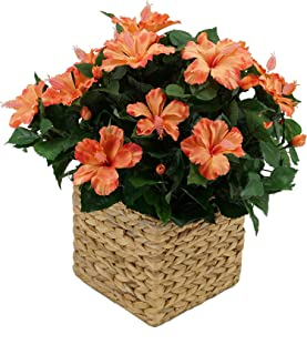 House of Silk Flowers Faux Hibiscus in Square Water Hyacinth Basket (Orange)