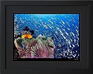 【写真工房アートフォト 額装写真】 モルディビアン・アネモネフィッシュとスカシテンジクダイの群れ/アリ環礁/モルディブ(ブラック 大判サイズ 557mm×442mm)