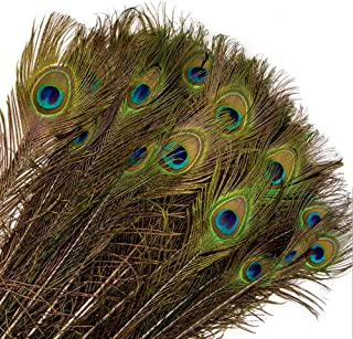 YGbridge Peacock Feathers 10-12 inch Natural Eye Peacock Tail Feathers for DIY Craft, Wedding Holiday Decoration (Pack of 20)