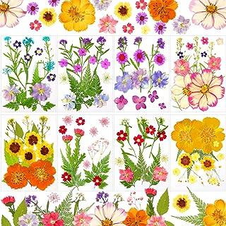 8 Sets de Fleurs Séchées Mini Fleurs Séchées Fleurs Pressées pour Ongles pour DIY Bougie Pendentif Ongle Bijoux en Résine ...