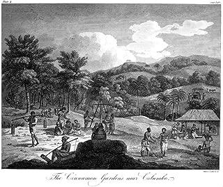 Ceylon Cinnamon Gardens NThe Cinnamon Gardens Near Colombo Copper Engraving English 1804 Poster Print by (24 x 36)