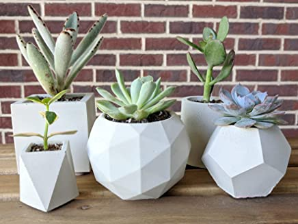 Set of 5 succulent planter, concrete plant pot