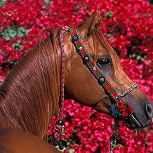 Best horse hd live wallpaper Reviews