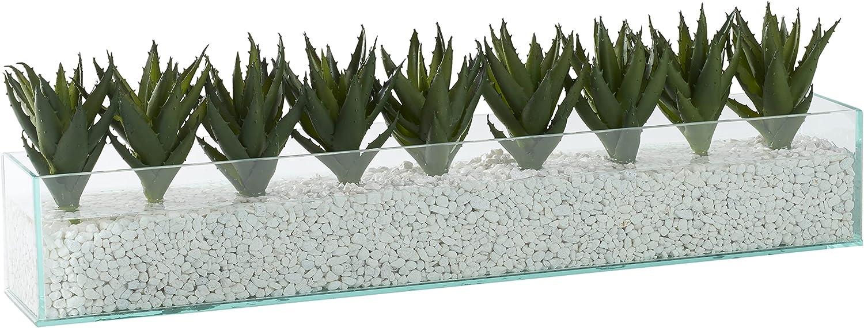 Mini Popular Raleigh Mall standard Aloe Plants in Rectangle Glass Aquarium