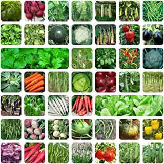 Only For Organic 45 Variety of Vegetable Seeds with Instruction Manual