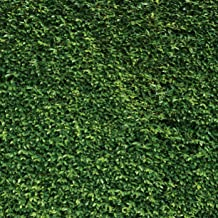 SJOLOON 10X10ft Green Leaves Photography Backdrops Nature Birthday Background for Birthday Party Seamless Backdrop Vinyl Photo Booth Prop 10923