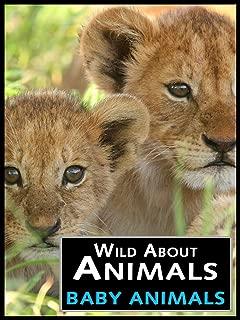 Wild About Animals: Baby Animals