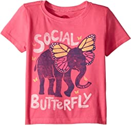 Social Butterfly Crusher (Toddler)