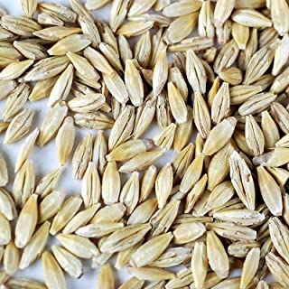 Organic Barley Seeds - 1 Oz Packet ~500 Seeds - Whole (Hull Intact) Barleygrass Seed - Ornamental Barley Grass, Farm & Gar...