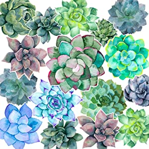 60 Pieces Succulents Cut-Outs Watercolor Succulents Cutouts 12 Styles Succulents Accents Decor Succulent Bulletin Board Paper-Cuts Classroom Wall Party Decoration with 100 Pieces Glue Point Dots