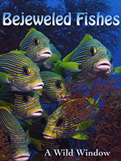Bejeweled Fishes