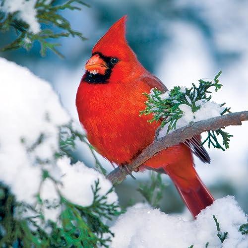 en linea Buffalo Games Games Games Audubon Birds, Winter Cardinal - 500pc Jigsaw Puzzle by Buffalo Games  en venta en línea