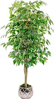 Maia Shop 1225 Ficus Troncos Naturales Elaborados con los Mejores Materiales Ideal para Decoración de hogar Árbol Plan...