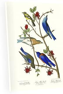 Best audubon bluebird print Reviews