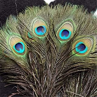Beautiful Natural Peacock Length 10