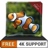 Acuario de peces payaso gratis HD: decora tu habitación con un hermoso acuario en tu televisor HDR 4K, televisor 8K y dispositivos de fuego como fondo de pantalla, decoración para las vacaciones de Na