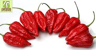 Liveseeds - Dorset Naga - Morich Chilli Pepper x 10 Seeds