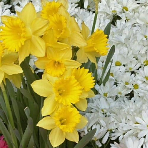 Daisies Flowers Keyboard